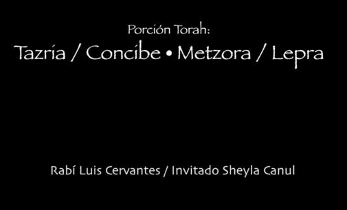 Shabbat Torah # 27: Tazria / Concibe + Metzora / Lepra